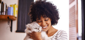 Какви са взаимоотношения ви с вашата котка (ГАЛЕРИЯ)