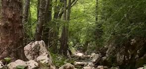"""ДОТАМ И ОБРАТНО"": До изворите и пещерите на Тъмната река (ВИДЕО)"