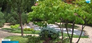 Обновиха японската градина в Софийския зоопарк (ВИДЕО+СНИМКИ)