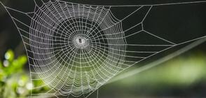Огромни паяжини покриха австралийски щат (ВИДЕО+СНИМКИ)