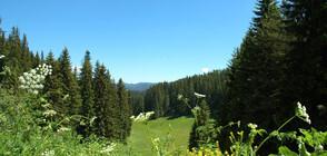 СЕЗОНЪТ ОТКРИТ: Какво предлагат планинските курорти