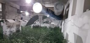 Разбиха наркооранжерия в София (СНИМКИ)