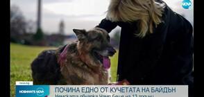 Едно от кучетата на семейство Байдън е починало