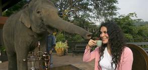Гладен слон нахлу в кухнята на семейство в Тайланд (СНИМКИ+ВИДЕО)