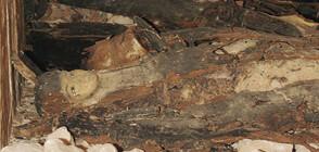 Болница изследва древноегипетска мумия с компютърен томограф (ВИДЕО)