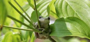 Кръстиха нов вид жаба на роклегендите Led Zeppelin