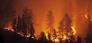 Няколко пожара пламнаха в Благоевградско (ВИДЕО)