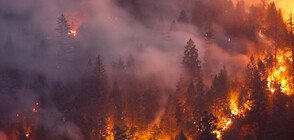170 forest fires broke in Bulgaria in last 24 hours