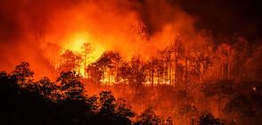 Нов пожар пламна в Сакар планина (ВИДЕО)