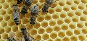 Над 50% е смъртността на пчелите у нас (ВИДЕО)