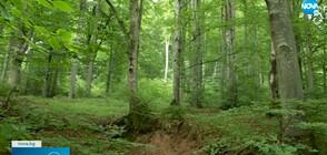 Има ли стратегия за защита на старите гори у нас