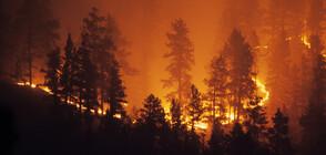 Продължава да гори боровата гора край Свиленград (ВИДЕО)