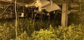Разкриха голяма високотехнологична лаборатория за марихуана в Русенско