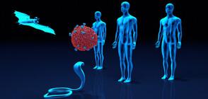 Опасна находка: открит е нов вид коронавирус у прилепи във Великобритания