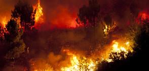 Голям пожар бушува в Анталия (ВИДЕО+СНИМКИ)
