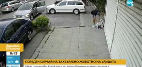 Мъж изостави коте пред ветеринарна клиника (ВИДЕО)