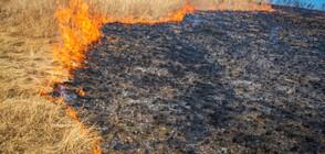 8 екипа огнеборци гасят пожар край хасковското село Брягово