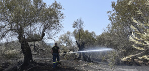 ТРОГАТЕЛНО: Гръцки пожарникари спасиха костенурка и кутре от опожарени гори (СНИМКИ)