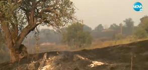 ПОЖАРИ В КЮСТЕНДИЛСКО: Изгоряха 15 къщи и училище (ВИДЕО)