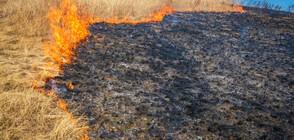 Пламъците в гората край Сандански взеха жертви (ВИДЕО)