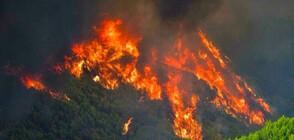 Продължава борбата с огнената стихия в Гърция (ВИДЕО)
