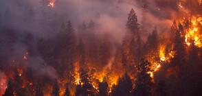 Мощни пожари продължават да опустошават Гърция и Турция (ВИДЕО)