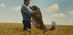 """""""Кучешки живот 2"""" е победител в петата седмица на """"Великият понеделник"""""""