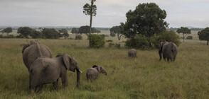 В Китай евакуираха над 150 000 души заради стадо слонове
