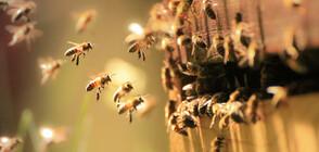 """""""Пълен абсурд"""": Пчели превзеха панелен блок, произвеждат мед в отдушниците"""