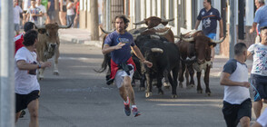 В Толедо отново се надбягват с бикове