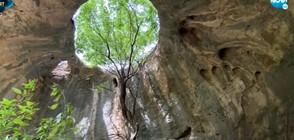 """""""ДОТАМ И ОБРАТНО"""": Разходка до """"Пещерата с дървото"""" (ВИДЕО)"""