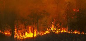 Голям пожар горя в гората над Варна