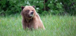 Как да реагираме, ако случайно срещнем мечка