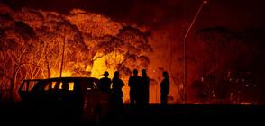 Летните горски пожари са отделили рекордно количество въглероден диоксид