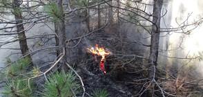 Отново пламна пожарът над Разлог (ВИДЕО+СНИМКИ)