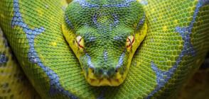 Змиите произлизат от шест различни вида динозаври