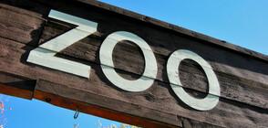 Бургаският зоопарк с нови обитатели, единствени в България