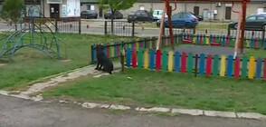 """""""Пълен абсурд"""": Детска площадка осъмна с къщички за бездомни кучета"""
