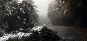 Зимата дойде: Снегът блокира пътища в България (ОБЗОР)