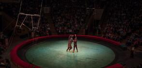 Мечка нападна бременна дресьорка в цирк в Русия (ВИДЕО)