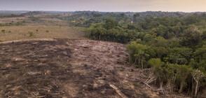 САЩ спасяват горите на Амазония