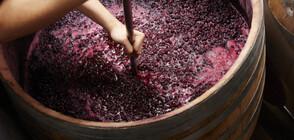 Откриха фабрика за вино на 2700 години