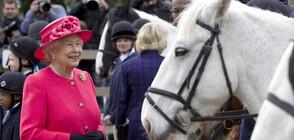 Забраниха на кралица Елизабет да язди