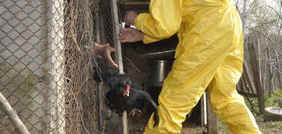 26 са потвърдените огнища на инфлуенца по птиците в 5 области у нас