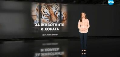 """""""Темата на NOVA"""": За животните и хората"""
