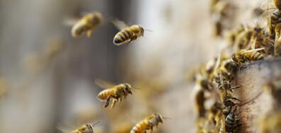 """Темата на NOVA: """"Физика на пчелите"""""""