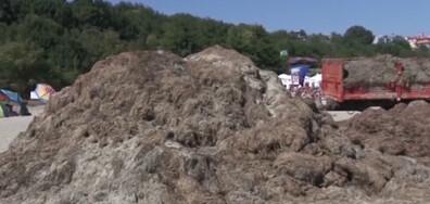 Кой изсипа камари с водорасли на плаж край Бургас?