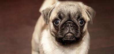 Пълните хора имат кучета с наднормено тегло