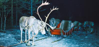 Елен от Лапландия доведе Дядо Коледа в Добрич (ВИДЕО)