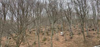 Намериха телата на бащата и сина, които се изгубиха под връх Ботев (СНИМКИ)